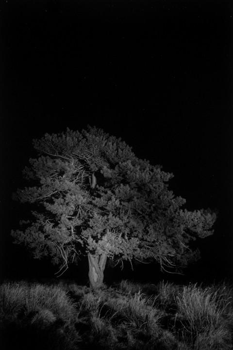 Durch die Nacht Foto: Miguel Brusch