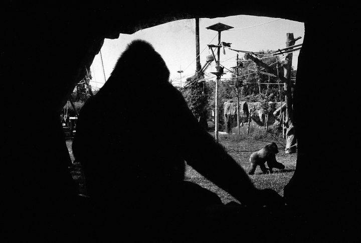 A Retrospective Arangement In The Zoo, Lissabon 2011, Foto: Thomas Sandberg