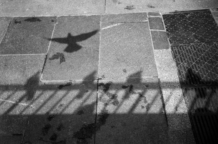 Taubenschatten, Kapitel Bulgakov, Moskau 2013: Foto: Thomas Sandberg